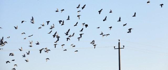 Informacja dotycząca ptasiej grypy